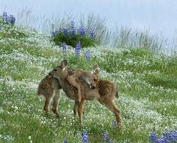 Baby Deer In The Wild